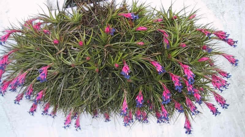 Plantas que absorben la humedad del hogar salud y - Plantas de interior purificadoras del aire del hogar ...