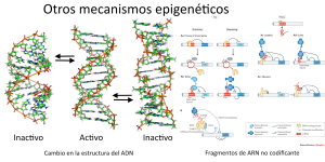 mecanismosepigeneticos